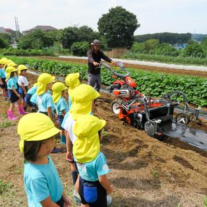 Daikon Radish Planting