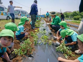 農業体験 ~畑作り・植付け~